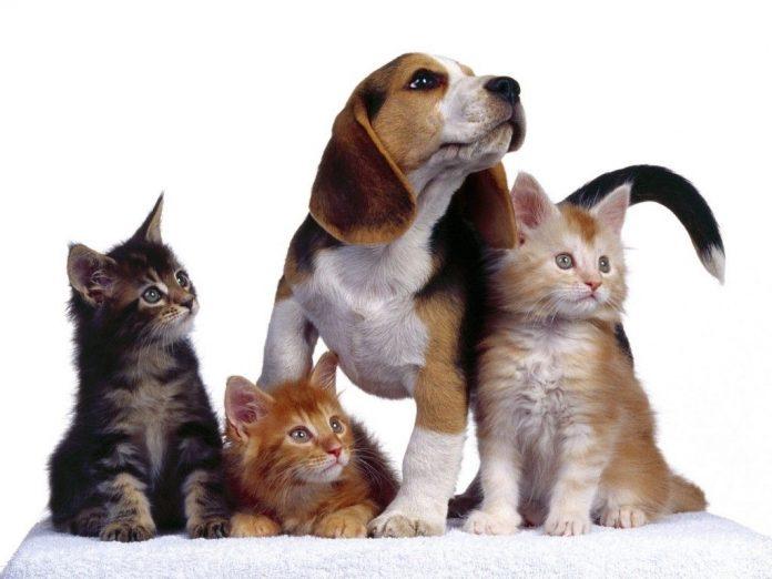 perros gatos - Proteccionistas, ADMA y la Dirección de Salud municipal se reunieron para laborar en conjunto