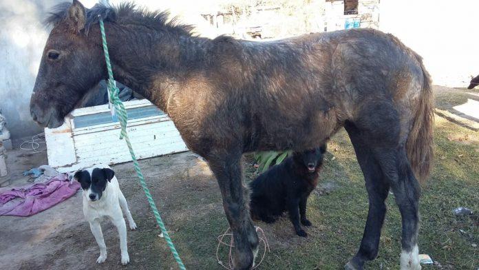 """caballo rescatado - """"Conquista de la libertad"""", una experiencia de aprendizaje pensada para jóvenes"""
