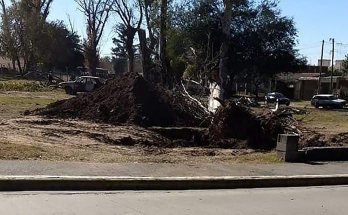 extraccion arboles agustin la porta E E - Vecinos presentaron queja por deforestación