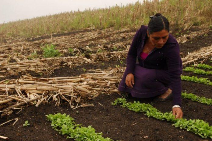 mujeres rurales1 - El 38,4% de los cordobeses es beneficiario de algún programa social de la Provincia