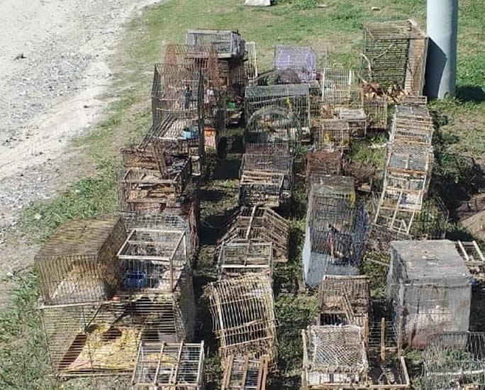 WhatsApp Image 2020 12 03 at 14.17.12 - Allanamiento por tráfico ilegal de aves autóctonas