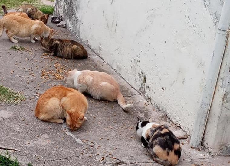 gatas gatas gatas E - Alimenta doce gatos, dos están preñadas y necesita hogares de tránsito para los gatitos