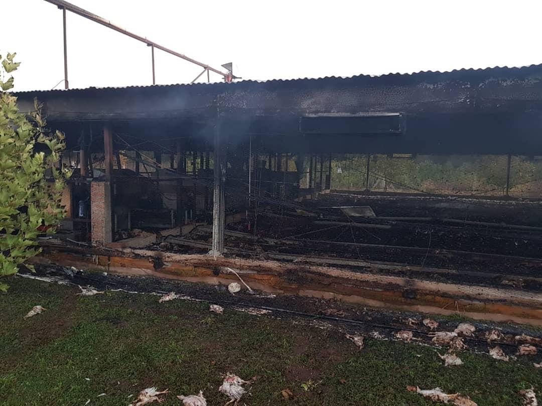 incendio criadero de pollos - Córdoba: incendio en un criadero provocó la muerte de 10 mil pollos