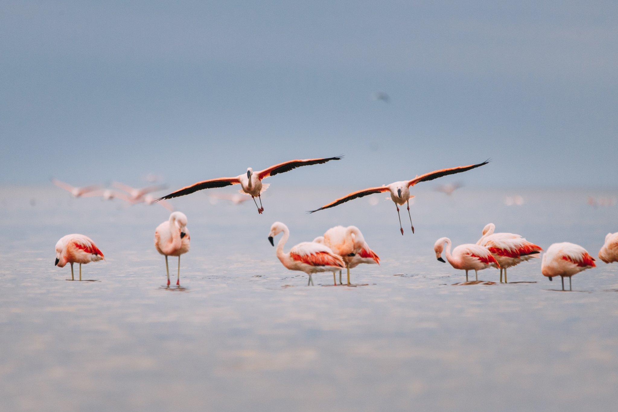 mar chiquita flamencos min coord - Ansenuza: el país tiene un nuevo Parque Nacional