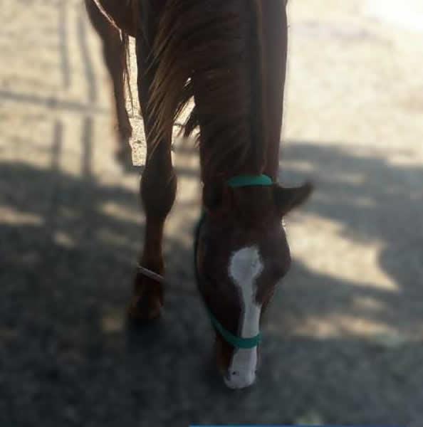 caballo robado - Encontraron en Córdoba un caballo robado en Alta Gracia