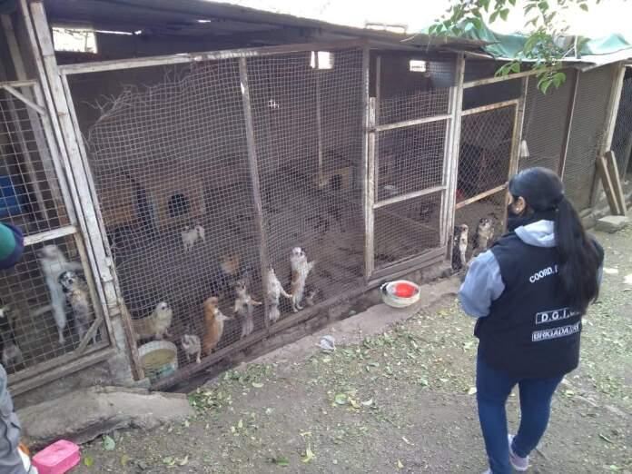 perros rescatados - Allanan criadero de Salsipuedes y rescatan a 83 perros de distintas razas