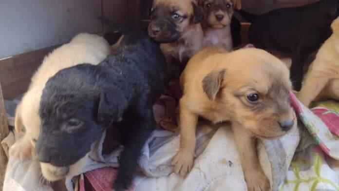 perros mujeres proteccionistas - Proteccionistas necesitan ayuda para sostener más de 40 animales